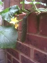 cucumber 17 aug 1mail.google.com