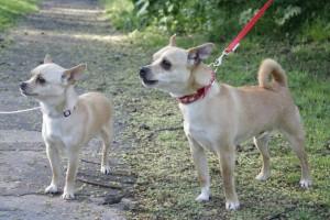 Stella and Tino Bowness