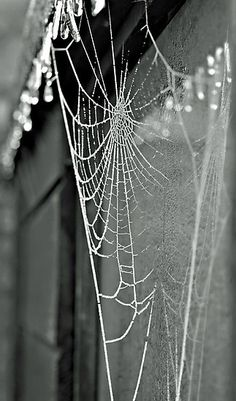 web from Pinterest