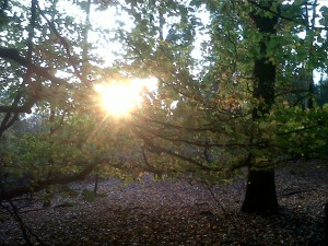 Sun through trees NDW Nov 2011